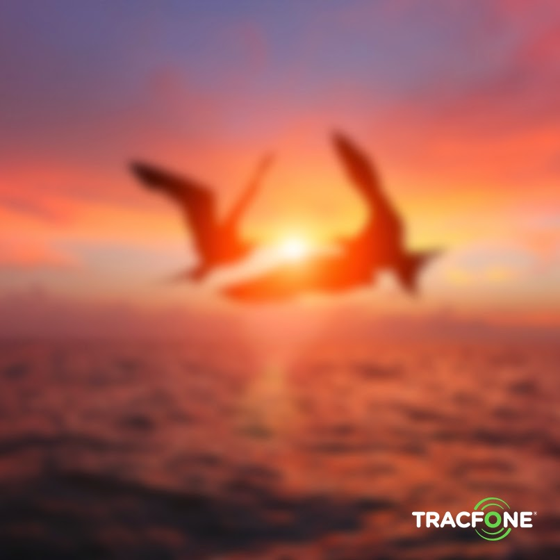 TracFone Tips: Phone Photos preview image
